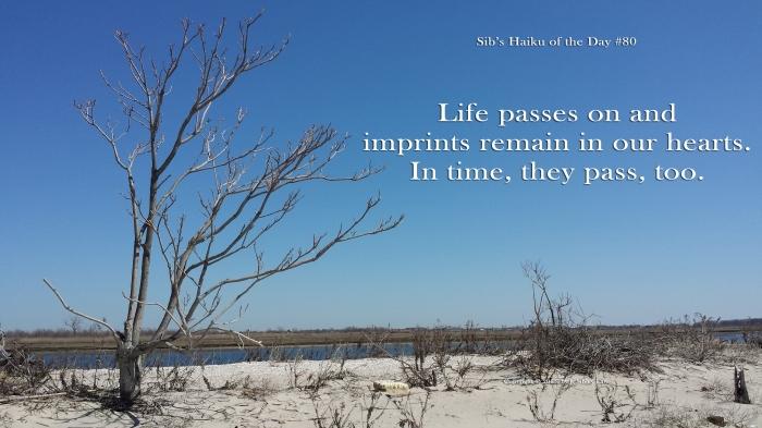 Sibs Haiku 080